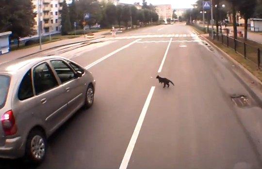 【衝撃映像】猫がタイヤに!ノーダメージ・・・猫が鉄柵に激突!ノーダメージ・・・