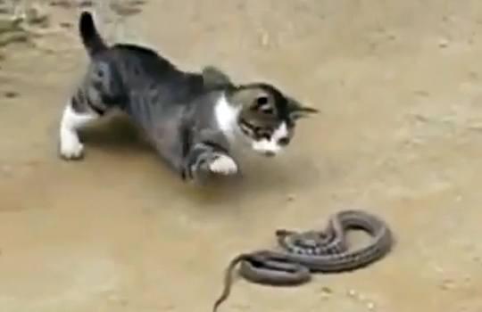 【衝撃映像】猫対ヘビ 意外な結末・・・