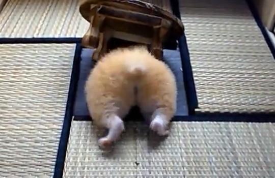 【萌え注意】穴に入る瞬間を集めたハムスター美尻動画集w