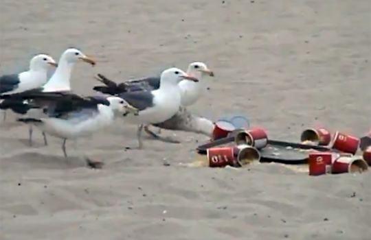 【おもしろ】画期的な攻撃!?鳥に下剤を入れたら爆撃機に変身したw