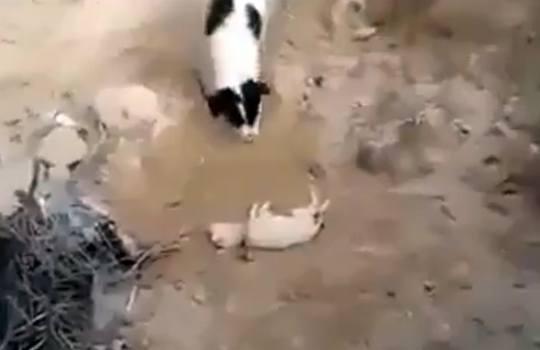 【衝撃映像】死んだ子犬を見つけた犬が砂に埋めて埋葬する