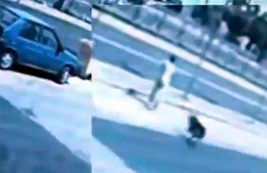 【閲覧注意】これは計画犯罪!?交通事故に追い込む知能犯な犬w