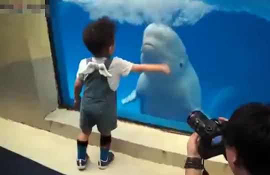 【おもしろ:イルカ】子供に水をぶっかけて喜ぶイルカの子供w