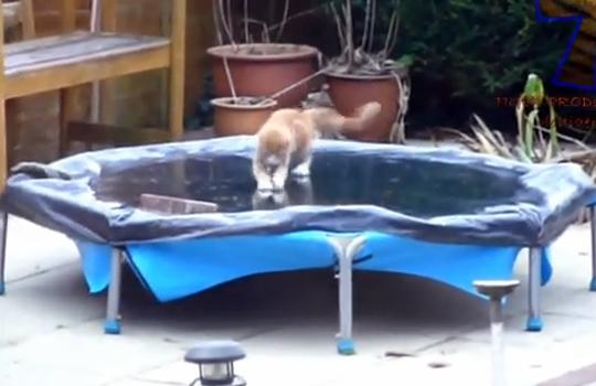 【萌え動画:犬猫】はじめて見る氷にはしゃいでこける犬猫動画集w