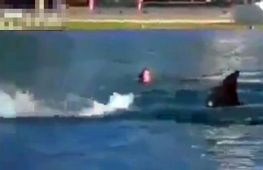 【おもしろ:いたずら】サメのフリをして近づいたらパニックを起こした奴のリアクションがやばいwww