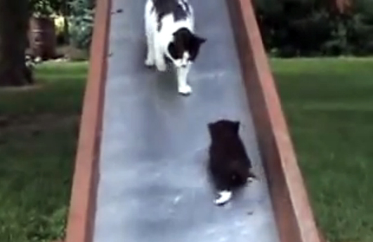 【萌え動画:猫】滑り台から落ちる子猫を助ける親猫の悲劇w