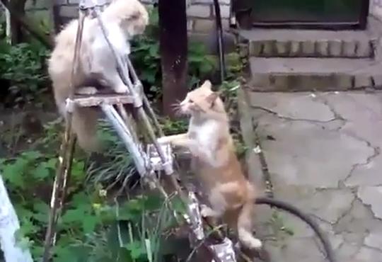 【おもしろ:猫】猫パンチを極めると光速で撃てるようになるらしい・・・