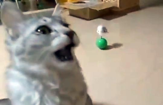 【萌え動画:猫】足のニオイを嗅いだ猫がこの表情で固まってる件・・・
