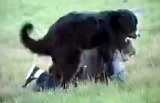【おもしろ動画:犬】ウホッw良い男!!ガチホモ犬の高速ピストンがやばいw