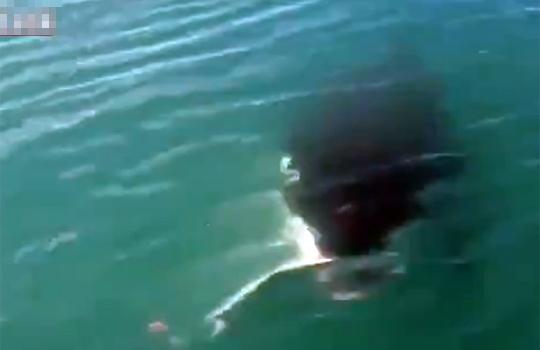 【衝撃映像:動物】大物キター!これはでかいのが釣れ・・・・残念wシャチでしたぁーw