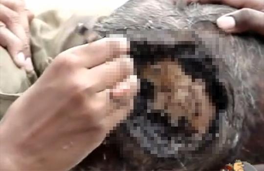 【グロ動画:怪我】頭の皮膚が剥がれて頭蓋骨が・・・周りには大量の蛆虫・・・