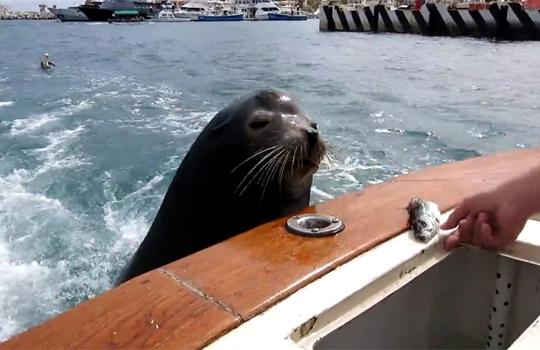 【萌え動画:海】魚をもらいに来た可愛過ぎるアシカw後から来た鳥に魚を奪われる(´・ω・`)