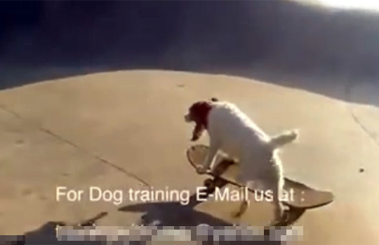 【萌え動画:犬】スケボーをガチで乗りこなす犬がイケメンすぎるw