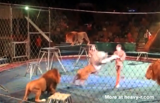 【閲覧注意:動物】サーカスでライオンに襲われる男性・・・折の中でライオンに囲まれて・・