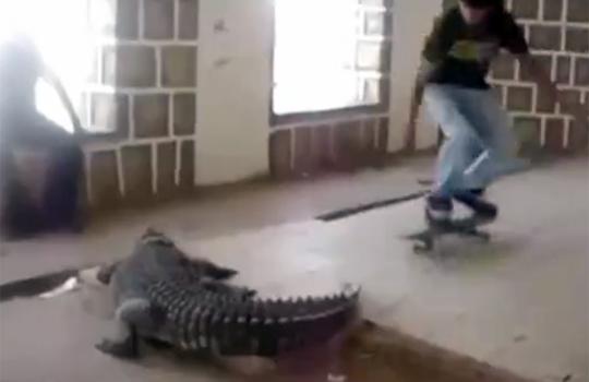 【衝撃映像:動物】起こるワニの上をスケボーで飛び越えてみたw