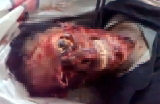【グロ動画】顔面の皮が剥げて骨が剥き出しに・・・中途半端な骸骨は怖すぎる