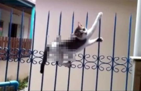 【グロ注意】鉄柵に突き刺さった猫の救出劇