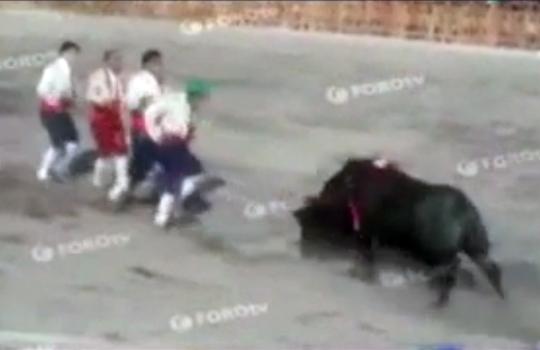 【衝撃映像】牛の人間ボーリングがおもしろすぐるwww