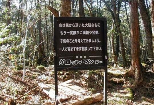 【閲覧注意】世界的自殺の名所 青木ヶ原樹海【画像19枚】