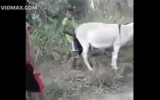 【馬鹿】ヤギとセックスする子供に悲劇が・・・!?