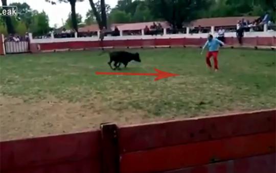 【動物】牛の突進クリティカルヒットしたけど質問ある?