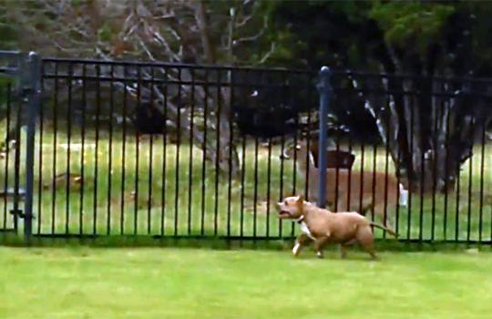 【おもしろ】犬と鹿がなんかおもしろい遊びしてるwww