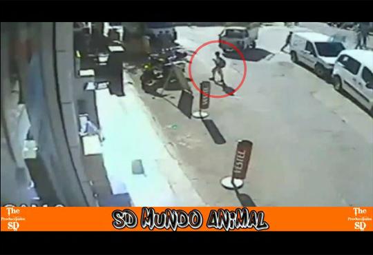 【奇跡】トラックが目の前を通過したと思ったら・・・ミラクル人身事故w