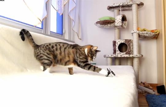 【猫動画】猫×2VSリモコンヘリの戦いが激しすぎるw