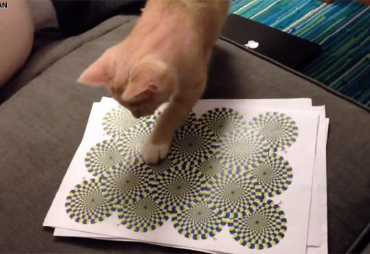 【猫動画】猫にトリックアート見せたら面白いことになったw