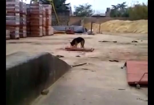 【閲覧注意】家の犬が強盗を捕まえて食べてるんだけど・・・