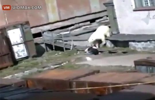 【閲覧注意】貧困層の女性に襲い掛かる白熊が怖すぎる・・・
