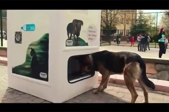 【衝撃映像】捨て犬、野良犬を助ける素晴らしいアイデア映像!