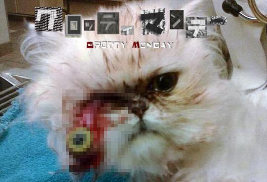 【グロ画像】猫好き閲覧禁止!猫のグロ画像まとめ【画像16枚】