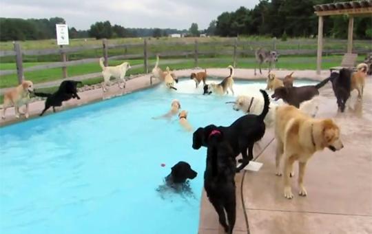 【萌え注意】犬だらけの水泳大会!たぶんポロリもあるかも!