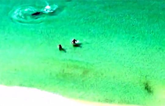 【衝撃映像】ビーチで遊んでる男達に迫るハンマーヘッドシャーク!!