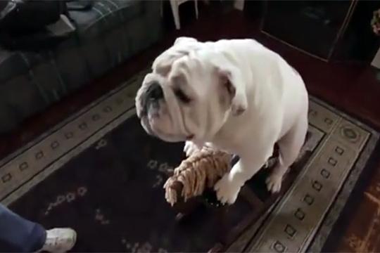 【おもしろ】賢すぎる犬の生活-たぶん前世はただのおっさん-