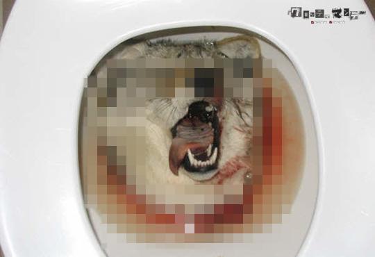 【グロ画像】動物愛護団体が見たらレイプ目になる様な動物グロ画像まとめ【画像12枚】