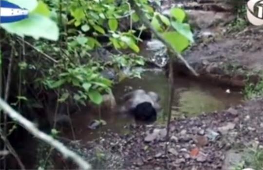【本物レイプ】小川に倒れてるセレブ女性・・・拉致されレイプされ殺され捨てられていた・・・