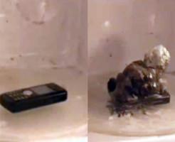 【面白動画】携帯をレンジでチンした結果・・・MONSTERが・・・
