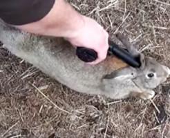 【グロ注意】可愛いウサギの解体映像がすっごいグロいwww
