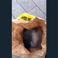 【閲覧注意】ゴミ箱から猫の鳴き声が→袋の中に瀕死状態の子猫が・・・