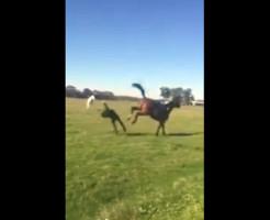 【衝撃映像】美女が落馬して馬の蹴りを顔面に食らってKOされてる件・・・
