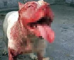 【閲覧注意】口元血塗れの犬が食べてたものが元飼い主な件・・・