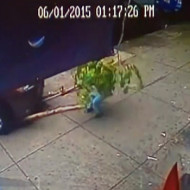 【衝撃映像】車が木に当たる→人が木の下敷き→その上に車・・・ ※動画有り