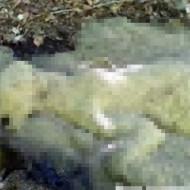 【超グロ注意】森に白熊が!と思ったら熊の形をした大量の○虫・・・