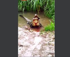 【閲覧注意】ワニの捕食グロすぎるwカメの甲羅意味ないなコレ・・・