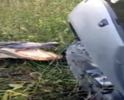 【衝撃映像】ワニVS自動車 ワニの前では車とか貧弱貧弱ぅ!