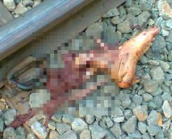 【グロ注意】仕事に失敗した男・・・線路に寝転びバラバラに・・・ 閲覧注意