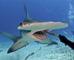 【鳥肌映像】こんな風にサメに狙われたらどうする???