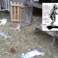 【UMA】ウクライナの村でチュパカブラ騒動。ウサギ73匹が虐殺される